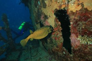 Halaveli Underwater wreck, photo by Shivaz Mohammed.