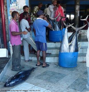 2011.1288909005.09-24th-oct--male-maldives