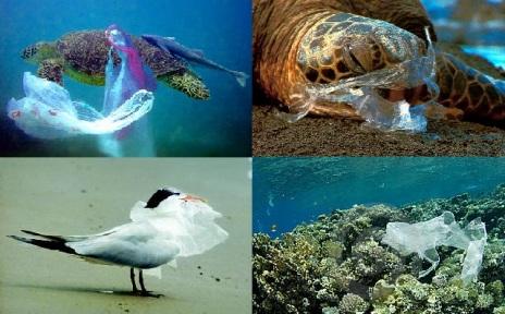turtle_plasticbag031